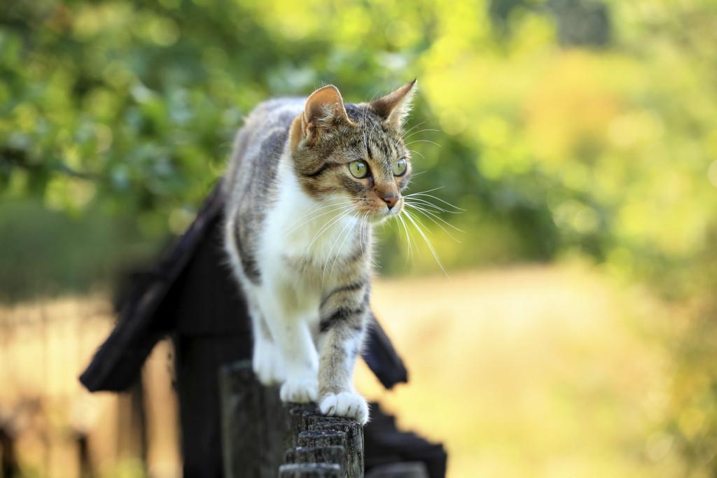 Weisenburger bau Katze