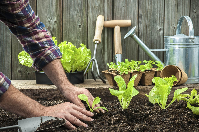 Weisenburger Bau Pflanzen einsetzen
